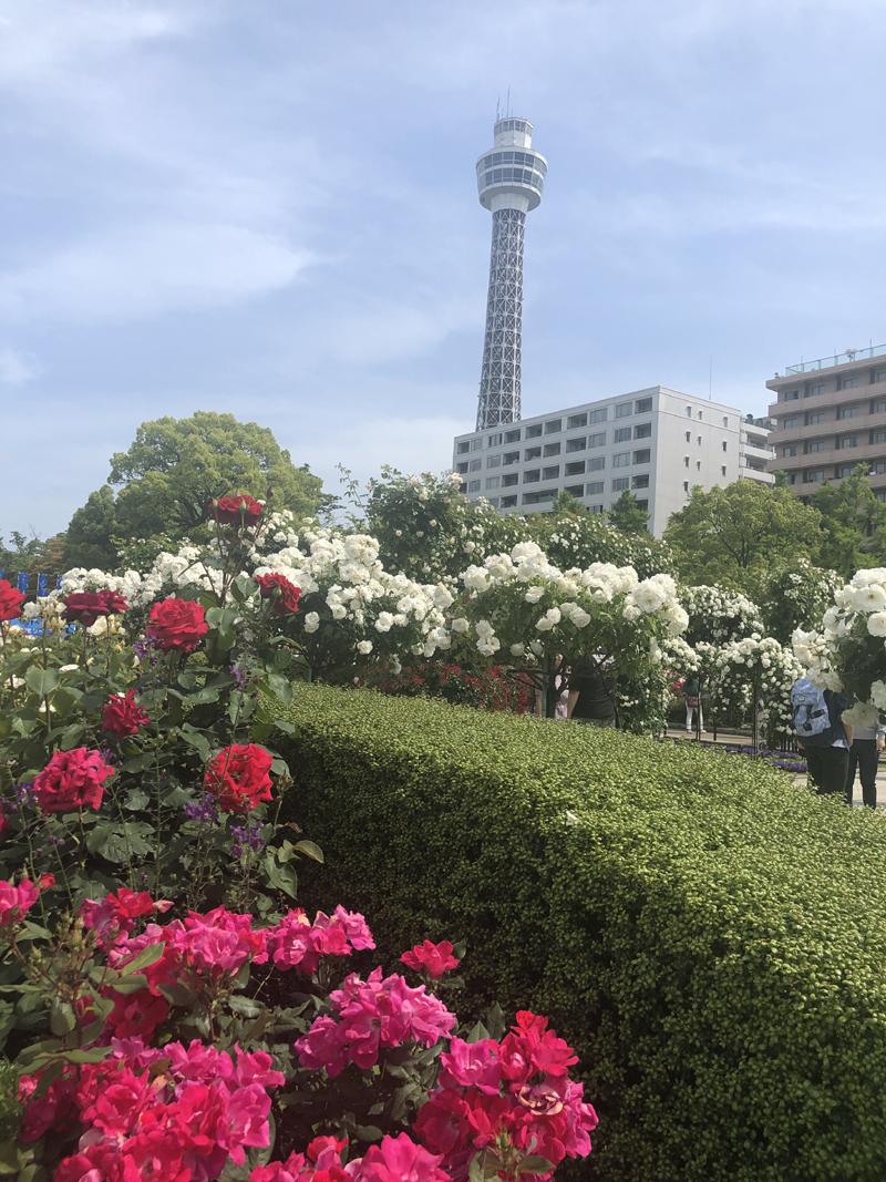 http://www.sugiyama1904.co.jp/ja/blog/archives/20190528-3.jpg